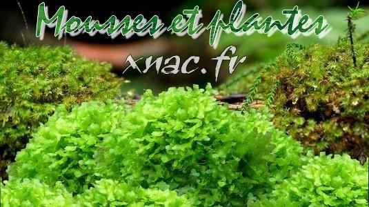 Mousses et plantes