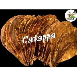 Catappa feuille XL