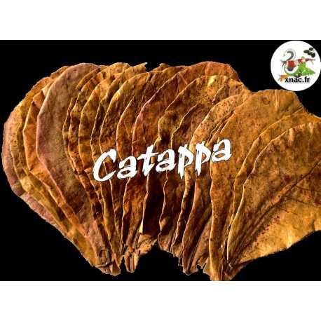 Catappa feuille XL