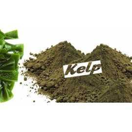 Kelp poudre sachet
